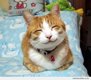 Smiling-Cat_o_16054